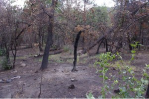 Fire Damage on the Trail