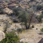Texas Canyon Valley Picture