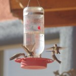 Hummingbird feeder picture