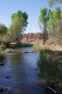 San Pedro River Narrows Picture