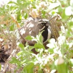 San Pedro River nesting bird picture