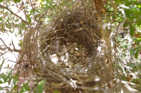 Empty nest Picture