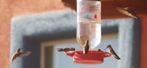 6 Hummingbirds at Southeast Arizona Lodgiing picture