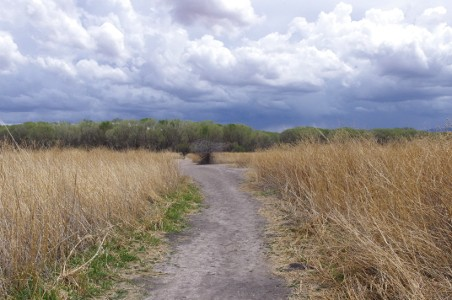 Birding the San Pedro House trail