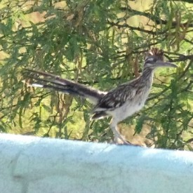 Roadrunner on Wall